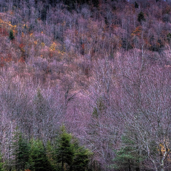 Photograph - Autumn Hillside by David Patterson