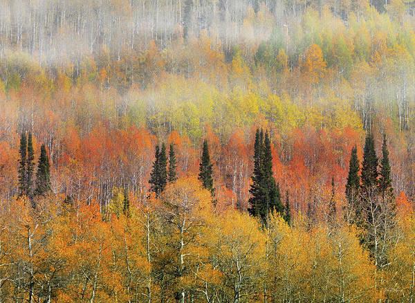 Wall Art - Photograph - Autumn Hillside by Leland D Howard