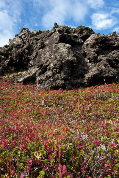 Wall Art - Photograph - Autumn In A Lava Field In Iceland by Arnthor Aevarsson