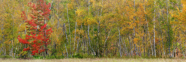 Wall Art - Photograph - Autumn In Acadia National Park, Maine by Anand Goteti
