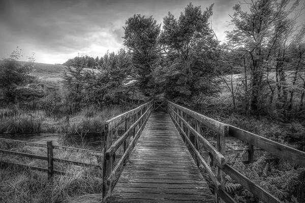 Photograph - Autumn In Black And White by Debra and Dave Vanderlaan