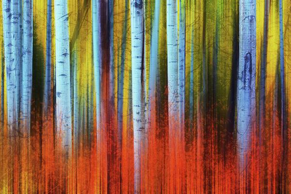 Photograph - Autumn In Color by John De Bord