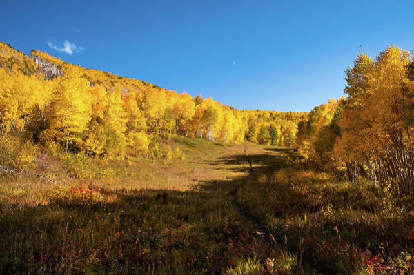 Grand Mesa National Forest Photograph - Autumn In Colorado by John Bartelt
