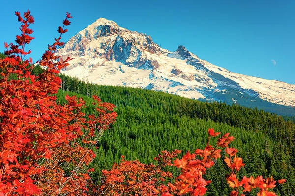 Autumn In Lolo Pass Mt. Hood National Forest Art Print