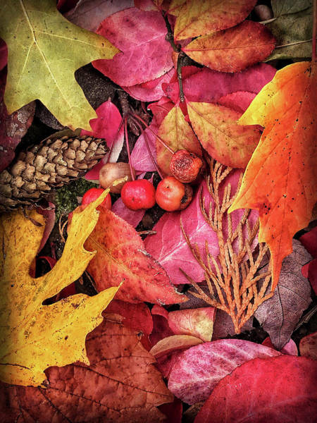 Photograph - Autumn In Michigan by Jill Love