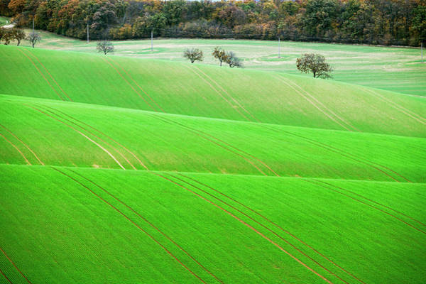 Photograph - Autumn In South Moravia 12 by Dubi Roman