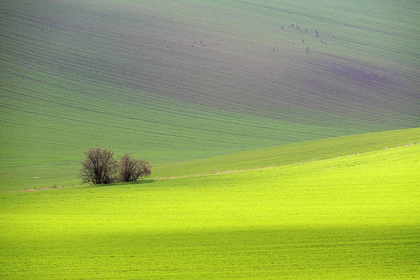Art Print featuring the photograph Autumn In South Moravia 13 by Dubi Roman