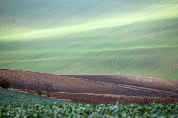 Photograph - Autumn In South Moravia 4 by Dubi Roman