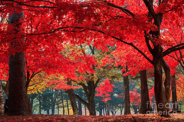 South Island Photograph - Autumn In Nami Island by Suthee Treewatanawong