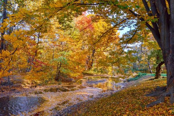 Photograph - Autumn In New York by Shannon Kelly