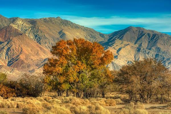 Wall Art - Photograph - Autumn In Northern California by Mountain Dreams