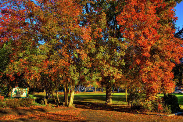 Photograph - Autumn In Reaney Park by David Patterson