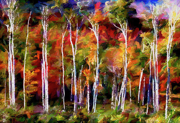 Photograph - Autumn In The Birches by Wayne King