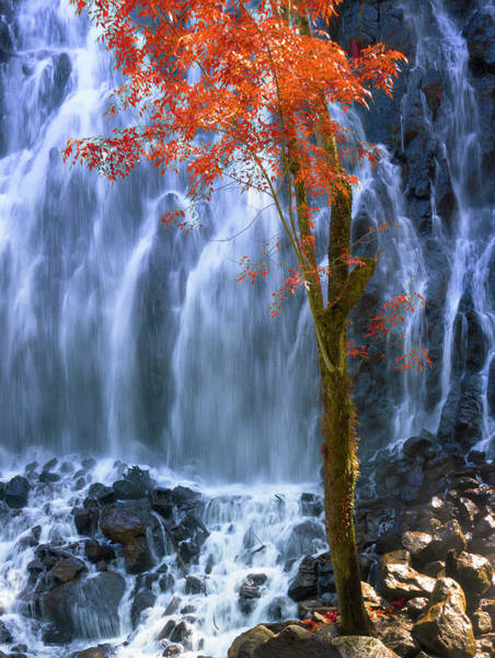 Photograph - Autumn In The Waterfall by Silvia Marcoschamer