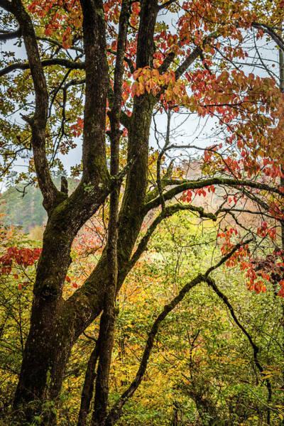 Photograph - Autumn Inspiration by Debra and Dave Vanderlaan
