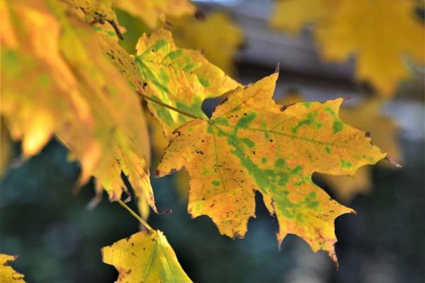 Photograph - Autumn by Kim Bemis