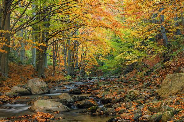 Photograph - Autumn Landscape by Evgeni Dinev