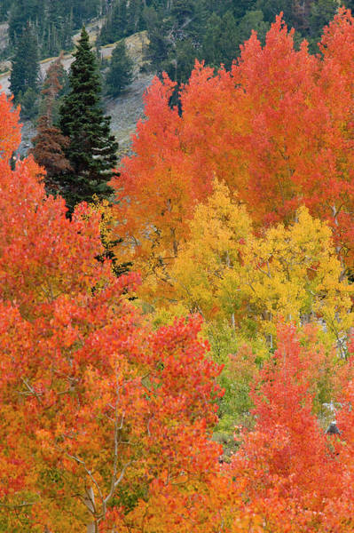 Little People Photograph - Autumn Landscape, Little Cottonwood by Danita Delimont