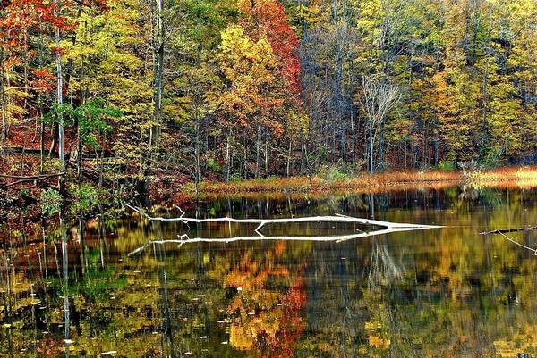 Wall Art - Photograph - Autumn Landscape Reflecting In A Pond by Frozen in Time Fine Art Photography