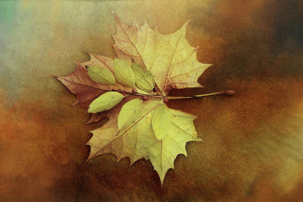 Wall Art - Digital Art - Autumn Leaf Beauty by Terry Davis