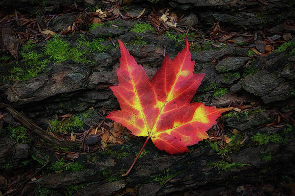 Wall Art - Photograph - Autumn Leaf by Heather Kenward