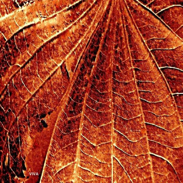 Photograph - Autumn Leaf Macro by VIVA Anderson