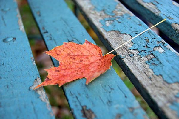 New England Autumn Photograph - Autumn Leave by Frankvandenbergh