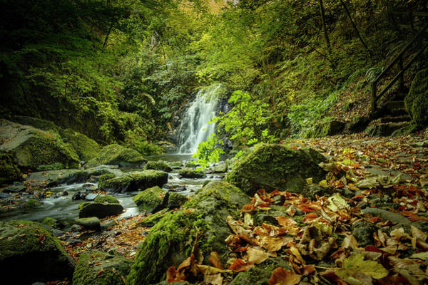 Photograph - Autumn Leaves At Glenoe II by Alan Campbell