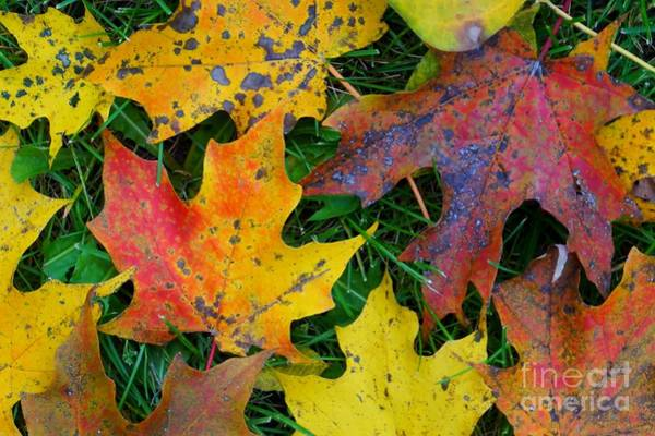 Photograph - Autumn Leaves by Christopher Shellhammer