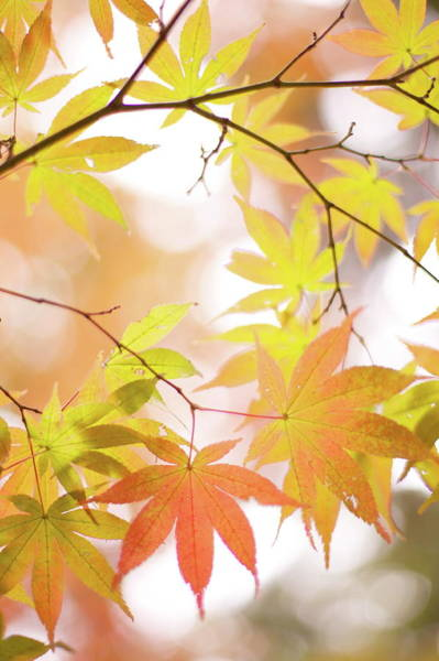 Photograph - Autumn Leaves by Cocoaloco