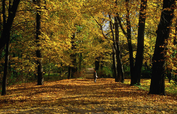 Season Photograph - Autumn Leaves Colour Lazienki Park In by Krzysztof Dydynski
