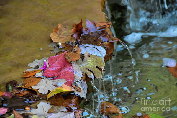 Photograph - Autumn Leaves by Diana Mary Sharpton