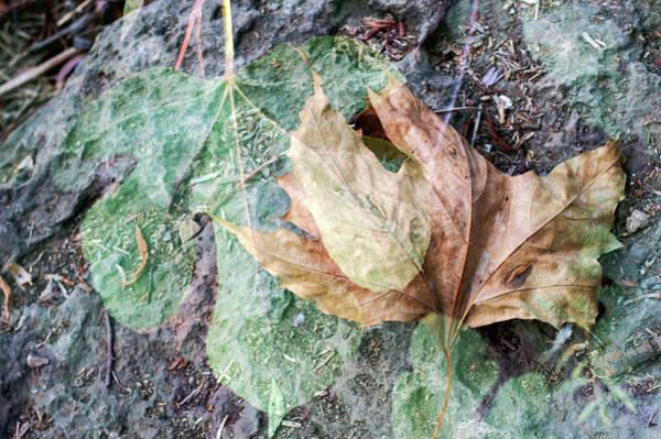 Photograph - Autumn Leaves by Dubi Roman