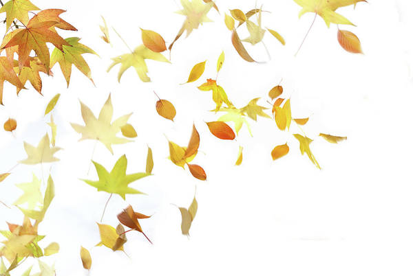 Winds Of Change Wall Art - Photograph - Autumn Leaves Falling by Vincenzo Lombardo