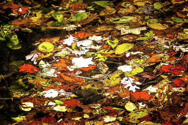 Wall Art - Photograph - Autumn Leaves Floating On Water Fx by Dan Carmichael