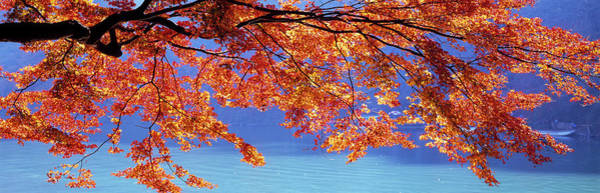 Wall Art - Photograph - Autumn Leaves, Hozu River, Kyoto City by Panoramic Images