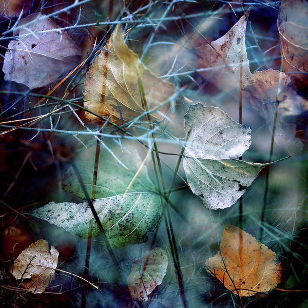 Photograph - Autumn Leaves II by Luis Mariano González
