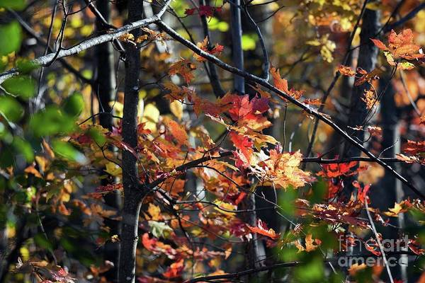 Photograph - Autumn Leaves In The Forest by Tatiana Travelways