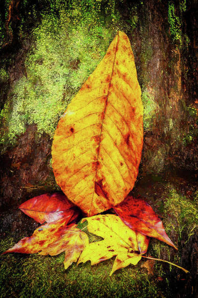 Wall Art - Photograph - Autumn Leaves On A Mossy Stump by Dan Carmichael