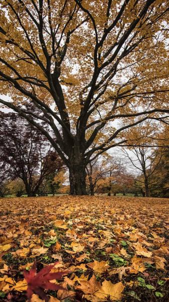 Wall Art - Photograph - Autumn Leaves Us  by Robert Fawcett