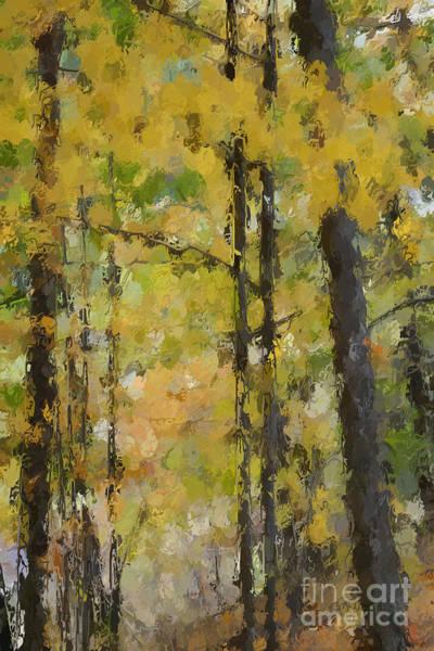 Autumn Light Art Print by David Boudreau
