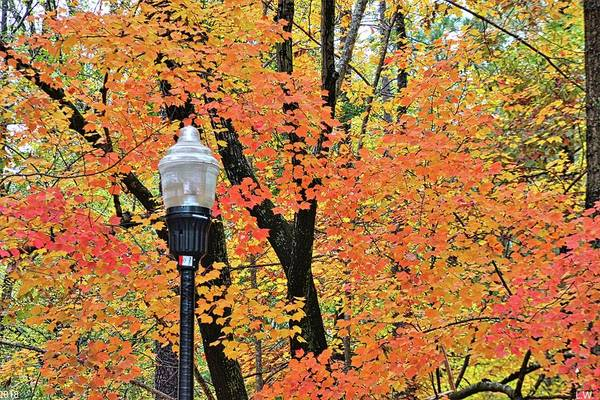 Photograph - Autumn Light by Lisa Wooten