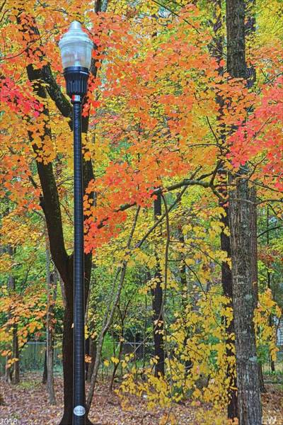 Photograph - Autumn Light Vertical by Lisa Wooten