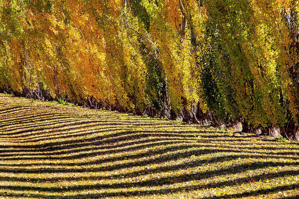 Wall Art - Photograph - Autumn Lines Yellow by Mark Duffy