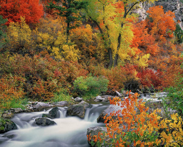 Photograph - Autumn Magic by Leland D Howard