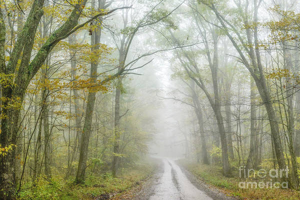 Photograph - Autumn Mist Monongahela National Forest by Thomas R Fletcher