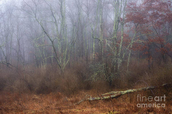 Photograph - Autumn Mist Wildlife Management Area by Thomas R Fletcher
