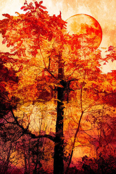 Photograph - Autumn Moon Abstract by Debra and Dave Vanderlaan