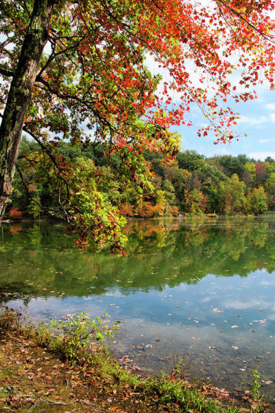Photograph - Autumn Morning by Christina Rollo