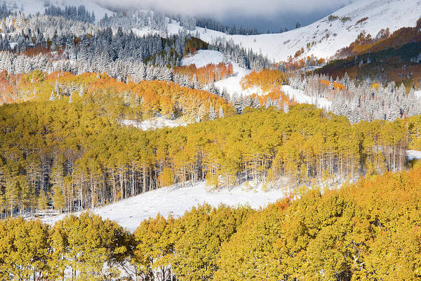 Photograph - Autumn Mountain Side by Leland D Howard